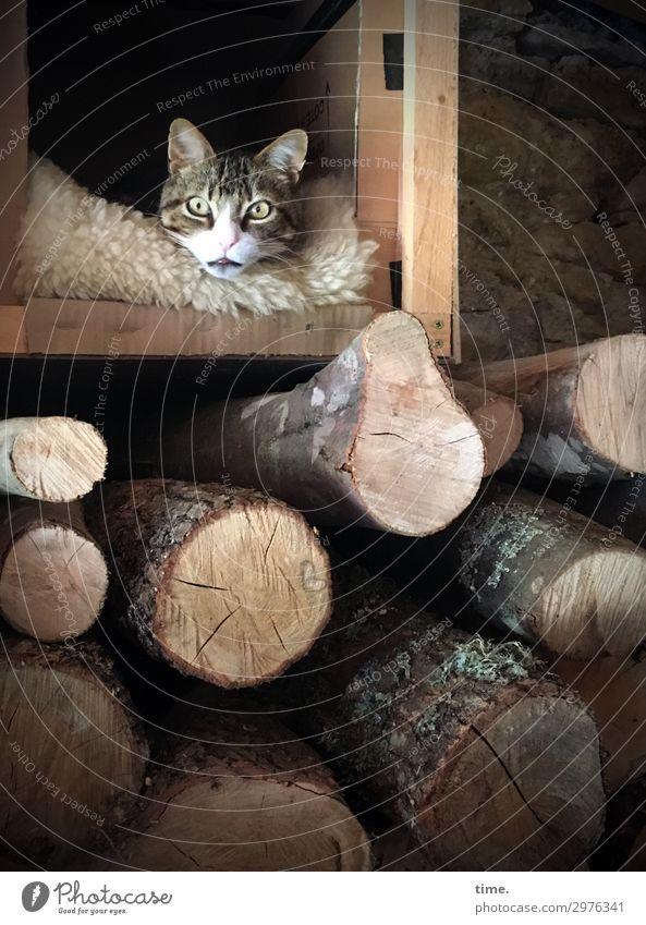 Katalanischer Wettertrotz (III) Tier Haustier Katze Tiergesicht 1 Brennholz Stall Fell Holz beobachten liegen Blick warten außergewöhnlich dunkel kuschlig