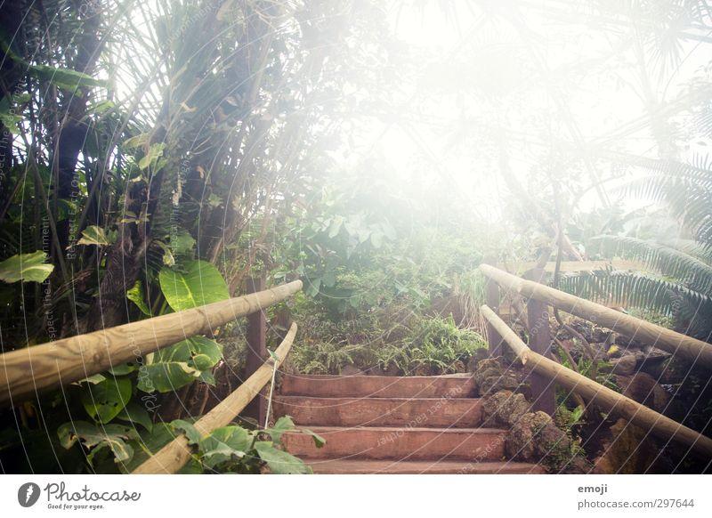 Feuchtgebiete Natur grün Pflanze Baum Umwelt Wärme Frühling natürlich Klima Urwald feucht exotisch tropisch Tropischer Garten