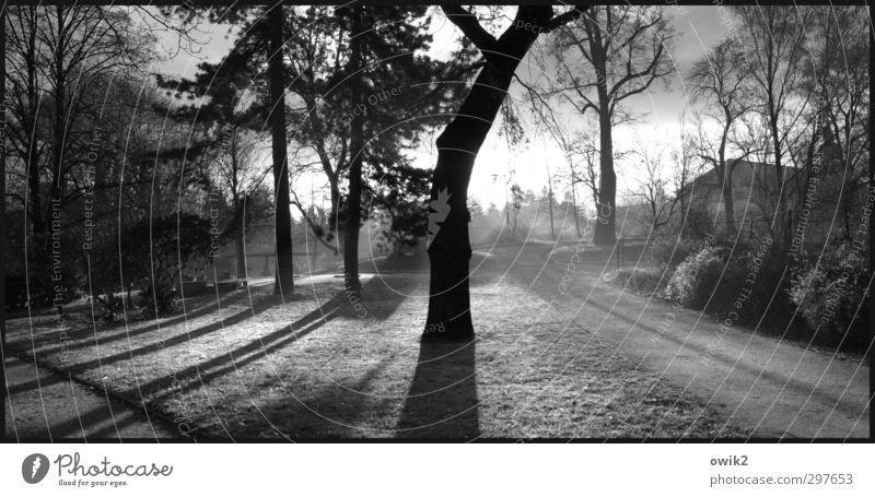 Stadtpark Umwelt Natur Landschaft Pflanze Wolken Horizont Frühling Klima Wetter Schönes Wetter Baum Gras Sträucher hell schön Wege & Pfade Haus