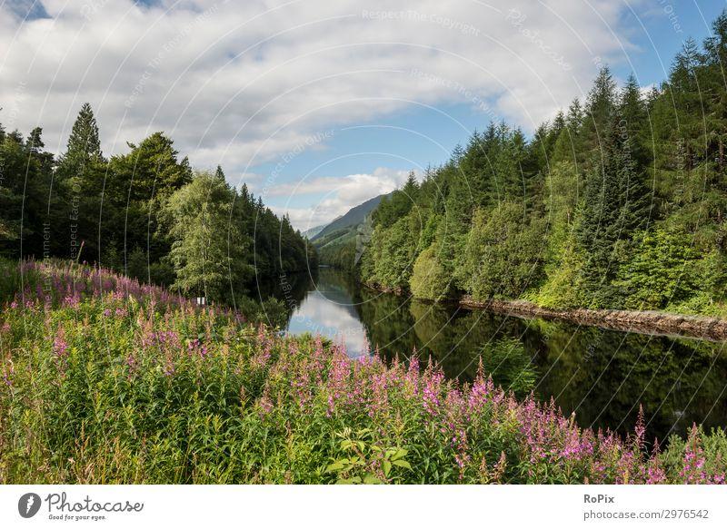 Himmel Ferien & Urlaub & Reisen Natur Sommer Landschaft Baum Blume Erholung Wolken Wald Lifestyle Leben Umwelt Gefühle Tourismus Freiheit