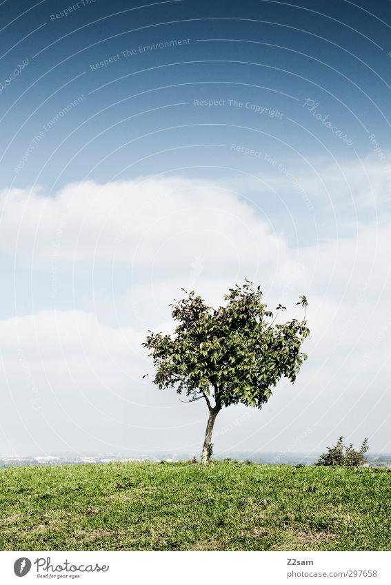 Feierabend-Platzerl Himmel Natur Sommer Baum Einsamkeit Landschaft Wolken ruhig Erholung Umwelt Ferne Berge u. Gebirge Wiese Freiheit Horizont natürlich