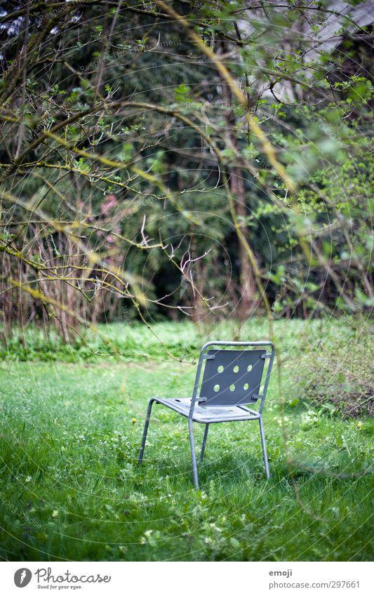 heute im TV: Natur Umwelt Frühling Pflanze Garten Park natürlich Neugier grün Botanischer Garten Stuhl Farbfoto Außenaufnahme Menschenleer Tag Totale