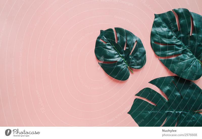 Kreative flache Lage einer grünen Botanikpflanze auf farbigem Hintergrund Lifestyle Stil Design schön Sommer Dekoration & Verzierung Tapete Business Natur
