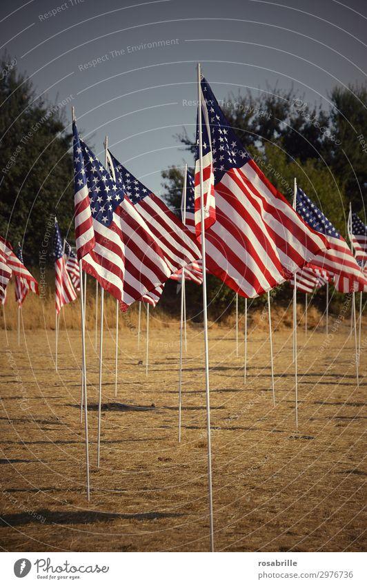 American flags | luftig Mensch Wind Denkmal Streifen Fahne Zusammensein viele Mut Leidenschaft loyal Solidarität Trauer Stolz Politik & Staat Amerika USA