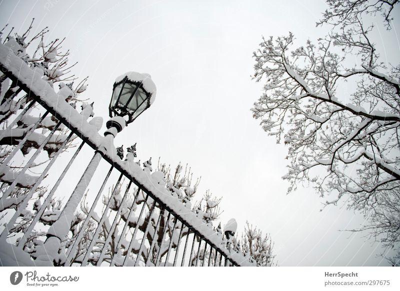 People's Park - 17Jan2013 Natur weiß Baum Winter schwarz kalt grau Schneefall Eis ästhetisch Ast Frost Straßenbeleuchtung Zaun Stadtzentrum