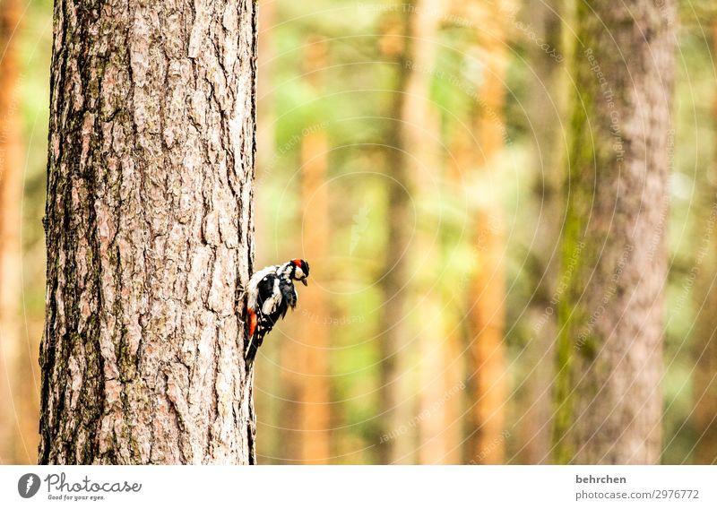wie ein specht im wald Natur schön Baum Tier ruhig Wald außergewöhnlich Freiheit Vogel fliegen Wildtier Feder fantastisch Flügel festhalten Baumstamm