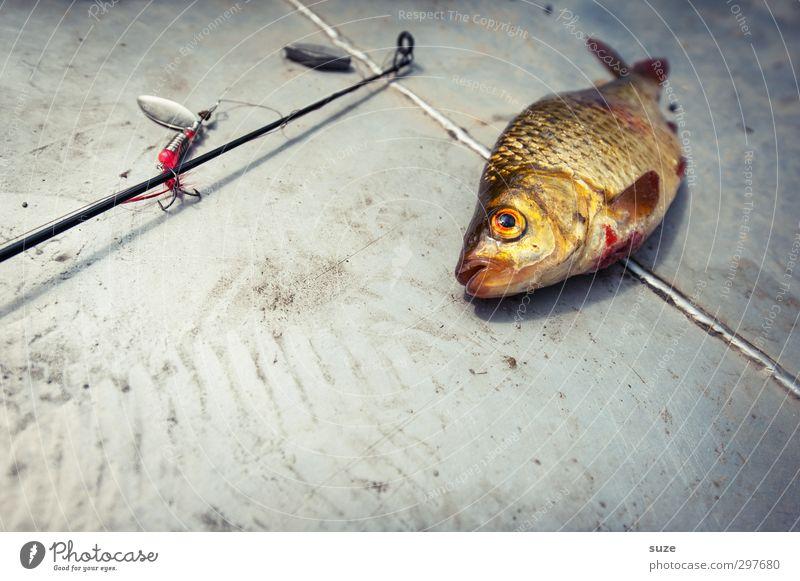 Da hab ich mir soviel Mühe gegeben Freizeit & Hobby Angeln Tier Wildtier Totes Tier Fisch 1 liegen authentisch grau Tod Angelköder Haken Angelgerät Zubehör