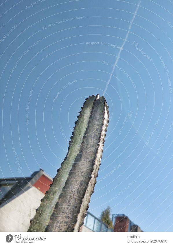 Shot Himmel Wolkenloser Himmel Sommer Schönes Wetter Kaktus Menschenleer Mauer Wand Balkon Dach Spitze blau braun grün rot weiß shot Kondensstreifen Gender