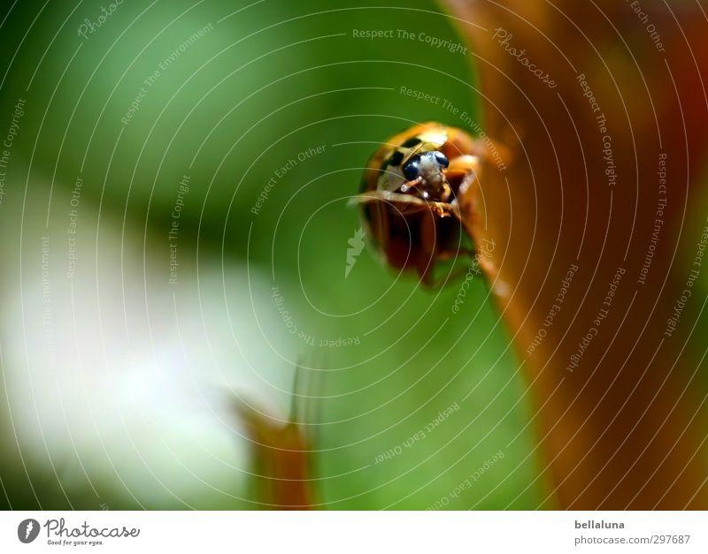 Da hab ich mir so viel Mühe gegeben... | Gipfelstürmer Natur Pflanze Tier Herbst Wetter Schönes Wetter Gras Blatt Wildpflanze Garten Park Wiese Wald Wildtier