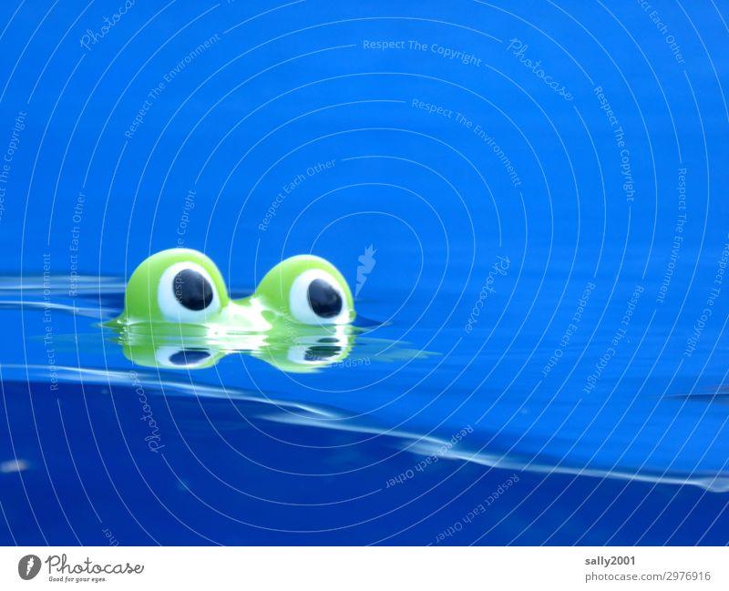 Nessie... Sommer Wasser Frosch 1 Tier Blick Schwimmen & Baden frech Freundlichkeit Neugier niedlich blau grün Wellen Badefrosch Auge Pupille Ungeheuer
