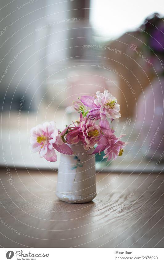 frühling Pflanze Frühling Sommer Blume schön rosa Akelei Vase Blumenstrauß zart Pastellton Blüte Blütenpflanze Stil Möbel Tisch Farbfoto Innenaufnahme