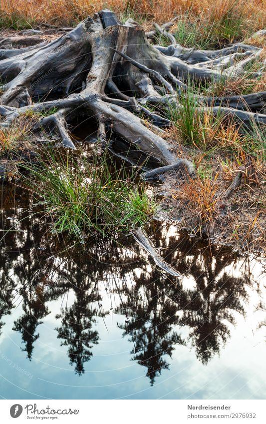 Es war einmal ein Wald Natur alt Pflanze Wasser Landschaft Baum dunkel Holz Umwelt Tod See Zukunft Symbole & Metaphern Zukunftsangst Urwald