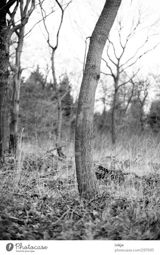 Bäumeverbiegen [da hab ich mir so viel Mühe gegeben !] Umwelt Natur Landschaft Herbst Baum Gras Sträucher Baumstamm Park Wald stehen lang gekrümmt krumm einzeln