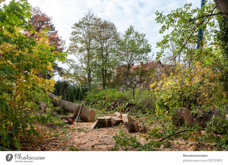 Baumfällung Arbeit & Erwerbstätigkeit Beruf Gartenarbeit Arbeitsplatz Landwirtschaft Forstwirtschaft Landschaft Park Dorf Kleinstadt Menschenleer Haus Holz