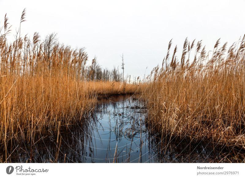 Bodden Ausflug Natur Landschaft Pflanze Wasser Gras Küste Seeufer Ostsee Moor Sumpf nass blau braun orange nachhaltig stagnierend Vorpommersche Boddenlandschaft