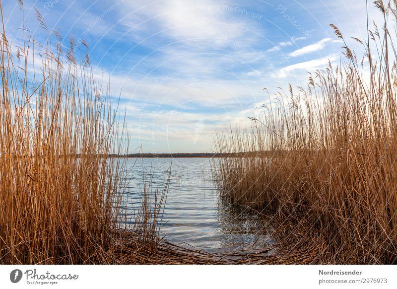 Bodden Ferien & Urlaub & Reisen Camping Fahrradtour Natur Landschaft Pflanze Wasser Himmel Wolken Frühling Sommer Herbst Schönes Wetter Seeufer Ostsee Moor