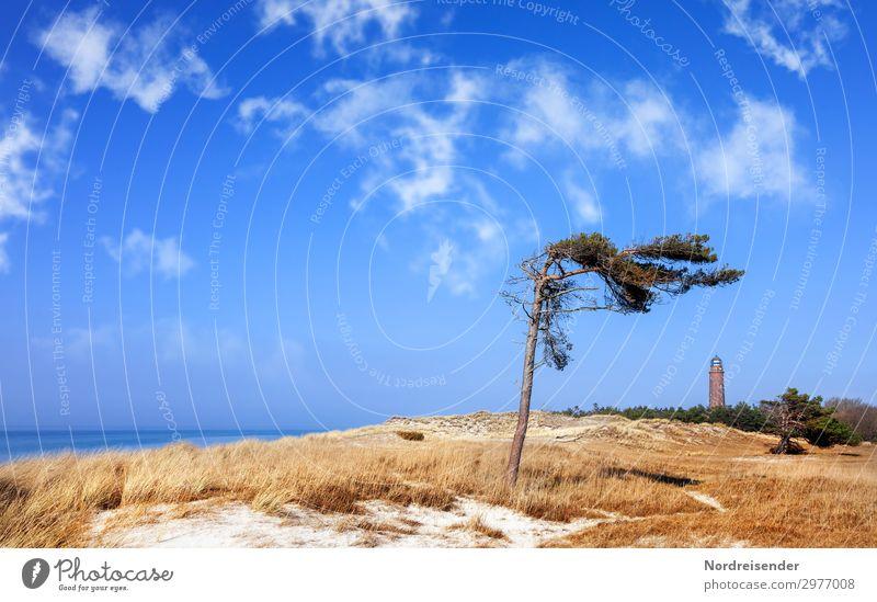 Windflüchter und Leuchtturm auf dem Darß Ferien & Urlaub & Reisen Tourismus Sommer Sommerurlaub Strand Meer Insel Natur Landschaft Sand Wasser Himmel Wolken