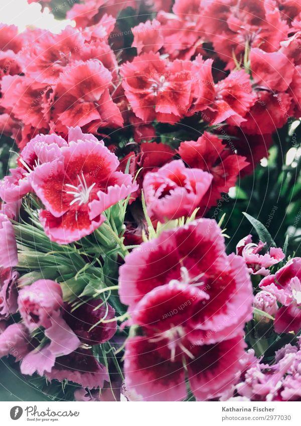 Blumenstrauß Natur Pflanze Frühling Sommer Herbst Blatt Blüte Blühend leuchten violett rosa rot weiß Blütenknospen Farbfoto Außenaufnahme Innenaufnahme