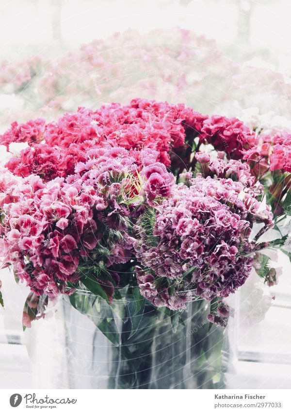 Doppelbelichtung Blumenstrauß Natur Pflanze Frühling Sommer Herbst Blühend gelb grün violett orange rosa rot türkis weiß Blüte Farbfoto Innenaufnahme Experiment