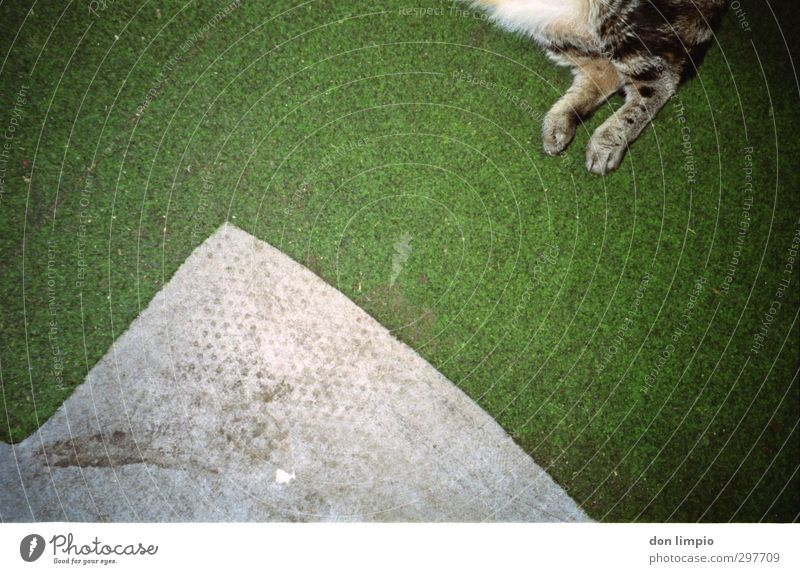..mal mehr Haustier Katze 1 Tier fallen fliegen grau grün Surrealismus Tigerfellmuster Beine Teppich Farbfoto Innenaufnahme Menschenleer Textfreiraum links