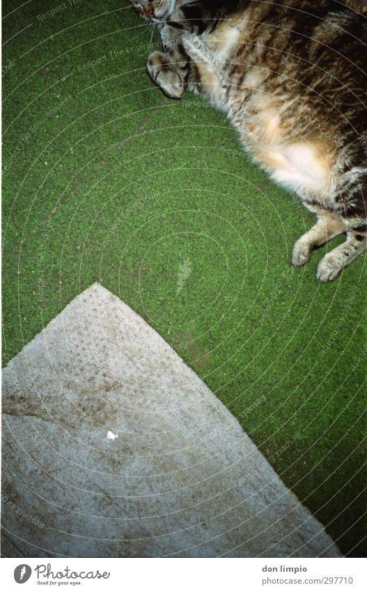 ...mal weniger Hügel fallen fliegen dick kuschlig grau grün Gier anstrengen Perspektive Surrealismus Tigerfellmuster analog Farbfoto Innenaufnahme Menschenleer