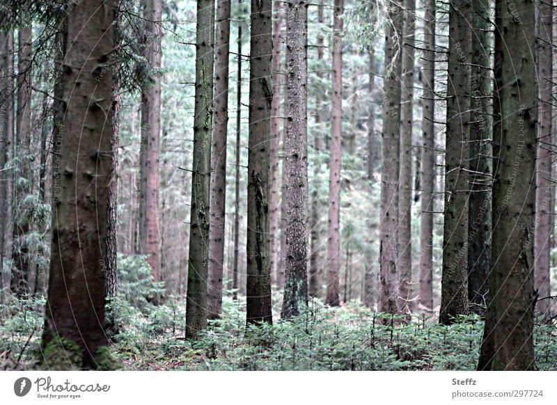 mit den Bäumen atmen Waldbaden Nadelwald Waldstimmung Waldrand Luftholen Waldluft ruhig Frühling im Wald Nadelbäume Duft Erholung Entspannung Lichteinfall grün