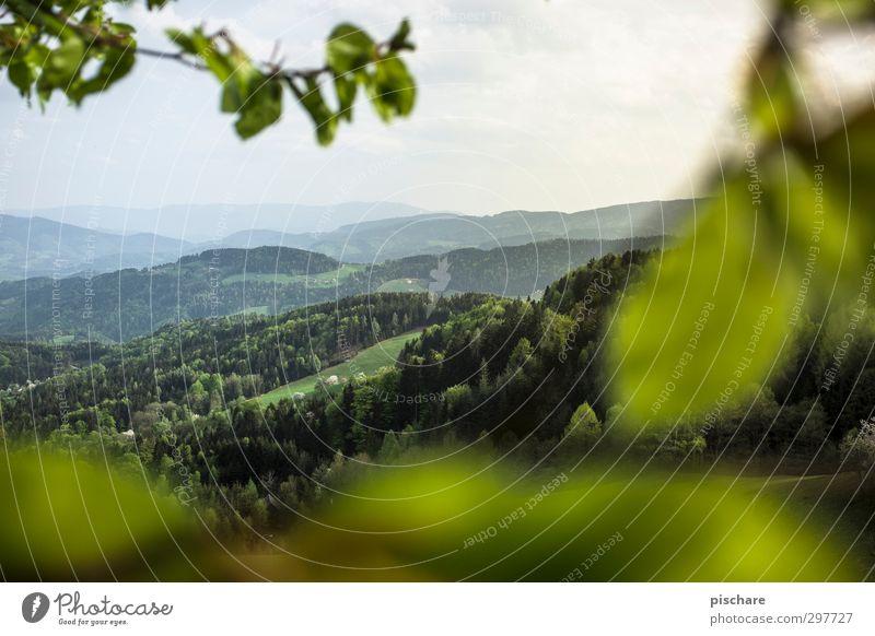 Grüne Mark II Natur grün Sommer Landschaft Wald Umwelt Horizont Hügel Österreich Bundesland Steiermark