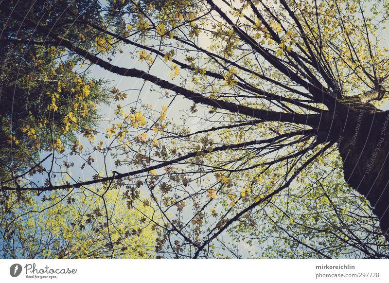The Tree Natur Pflanze Himmel Frühling Klima Schönes Wetter Baum Blatt Grünpflanze Park Wald Freundlichkeit Fröhlichkeit frisch groß Unendlichkeit blau braun