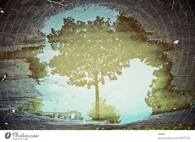 OMG: ich bin ein Baum Umwelt Natur Wasser Herbst Wetter Blatt authentisch dreckig dunkel nass natürlich blau grau herbstlich Baumkrone Pfütze Wasseroberfläche