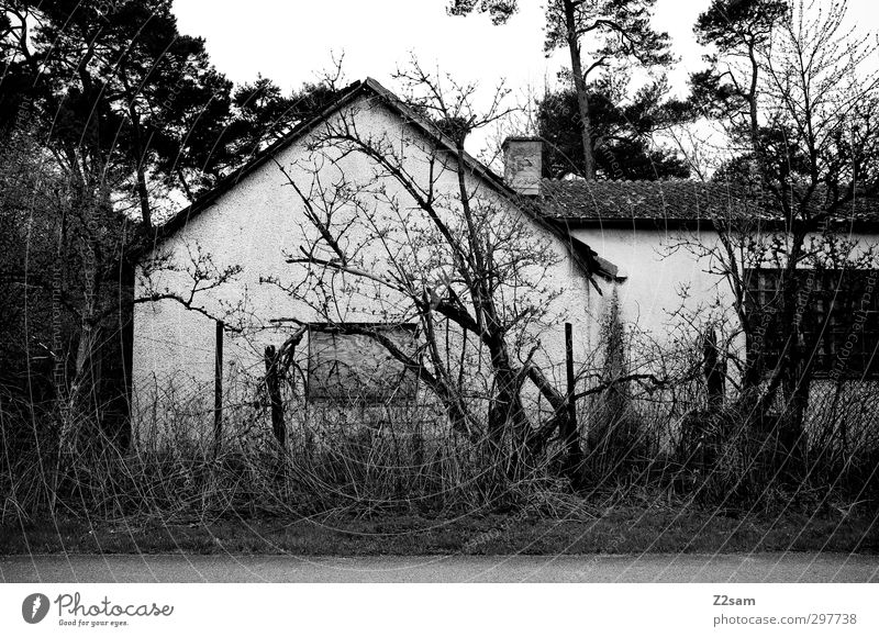 hexenhaus Landschaft Baum Sträucher Menschenleer Haus Hütte alt bedrohlich dreckig dunkel gruselig trashig ruhig Endzeitstimmung Verfall Vergänglichkeit