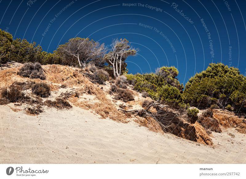 wolkenlos Ferien & Urlaub & Reisen Ferne Natur Landschaft Urelemente Erde Sand Luft Himmel Wolkenloser Himmel Sommer Klima Schönes Wetter Wärme Dürre Pflanze