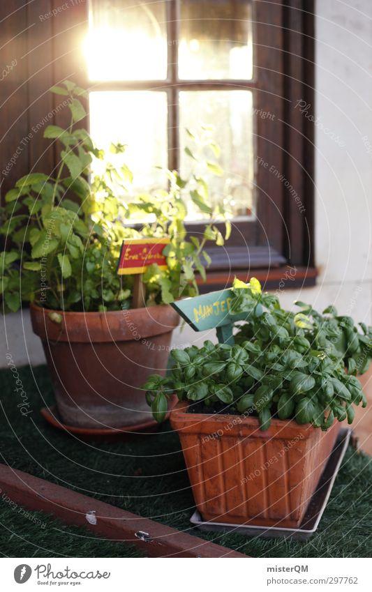 Küchenfenster. Kunst ästhetisch Pflanze pflanzlich Bioprodukte Biologische Landwirtschaft frisch ökologisch Blumentopf Kräuter & Gewürze Basilikum