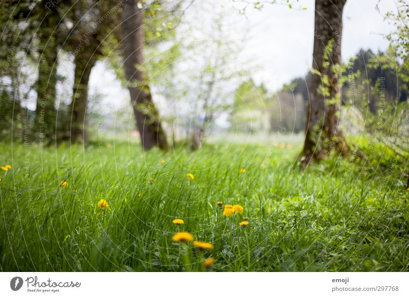 hörst du den Wind? Natur grün Landschaft Umwelt Wiese Gras Frühling natürlich Wind Schönes Wetter