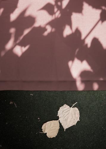 Balkonherbst Natur Blatt ruhig Herbst Umwelt Traurigkeit Tod Zusammensein Freundschaft paarweise liegen Vergänglichkeit berühren Trauer Gelassenheit