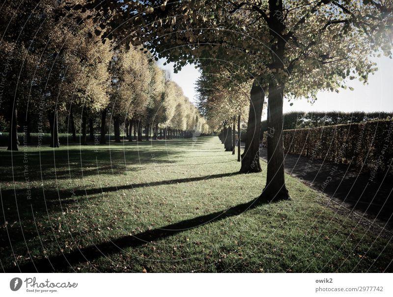 Die Schatten werden länger Umwelt Natur Landschaft Pflanze Himmel Herbst Schönes Wetter Baum Hecke Park Wiese Herrenhäuser Gärten Sehenswürdigkeit stehen