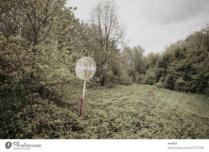 Fahrverbot Umwelt Natur Landschaft Pflanze Wolken Frühling Baum Gras Sträucher Wiese Wald Verkehrswege Metall Schilder & Markierungen Hinweisschild Warnschild