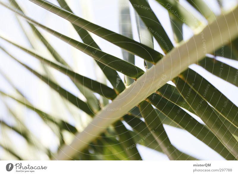 Auf die Palme. Natur Ferien & Urlaub & Reisen grün ruhig Erholung Kunst ästhetisch Wellness Sommerurlaub Palme abgelegen Palmenwedel Urlaubsfoto Urlaubsort Urlaubsstimmung Urlaubsgrüße