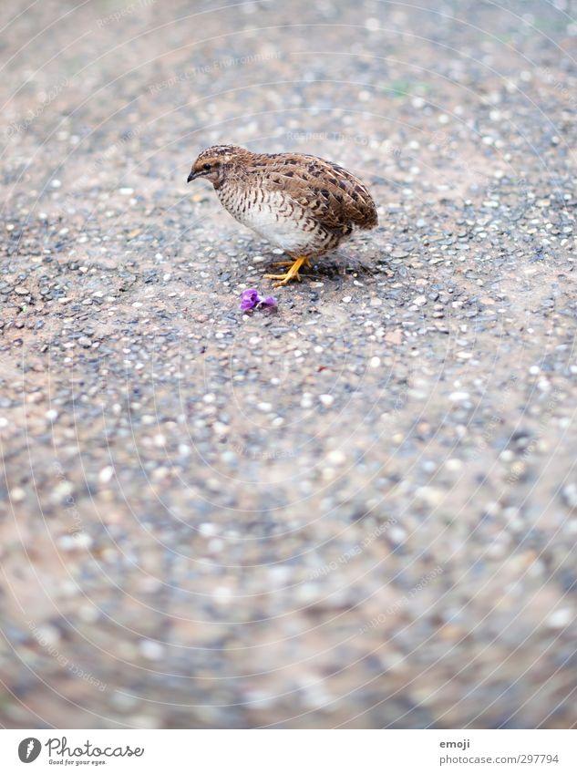 Pipsi Tier Wildtier Vogel Zoo 1 Tierjunges klein niedlich Farbfoto Außenaufnahme Menschenleer Textfreiraum unten Tag Schwache Tiefenschärfe