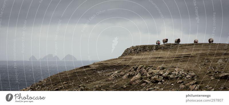 Irische Küstenwache Natur Meer Einsamkeit Landschaft Tier Wolken Umwelt Ferne Wiese Freiheit Felsen Regen Wetter Erde Nebel