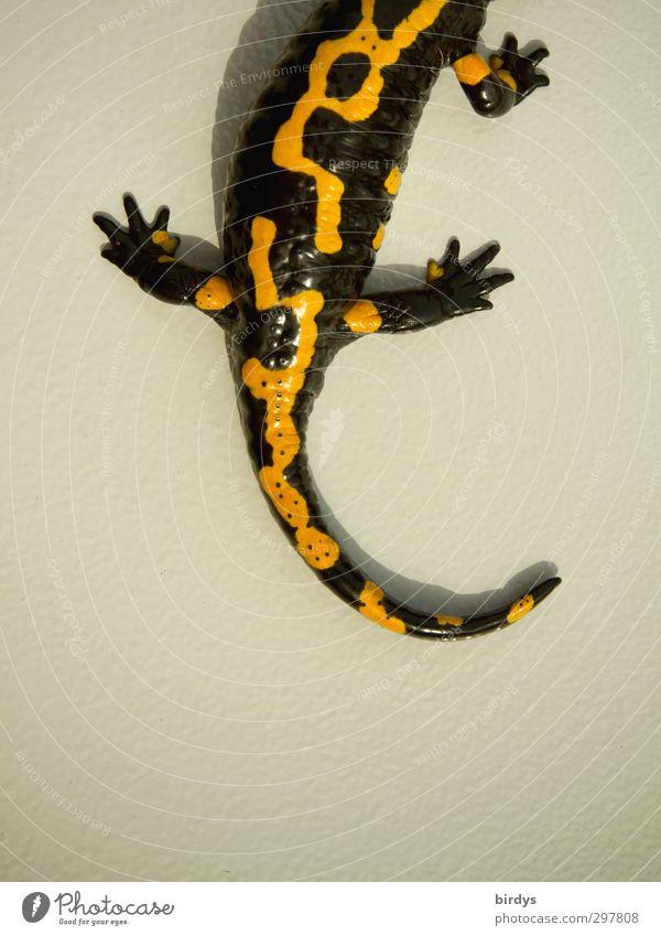3/4 - Lurch Schönes Wetter Salamander Schwanzlurche Feuersalamander 1 Tier leuchten ästhetisch außergewöhnlich exotisch schön gelb schwarz beweglich Design