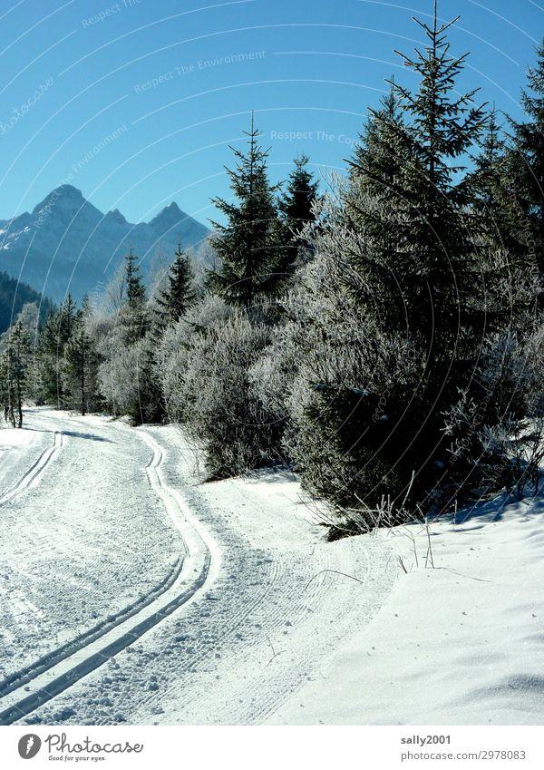 die Loipe ist gespurt... Skilanglauf Landschaft Sonnenlicht Winter Schönes Wetter Schnee Baum Wald Alpen Berge u. Gebirge Sport Wintersport Außenaufnahme