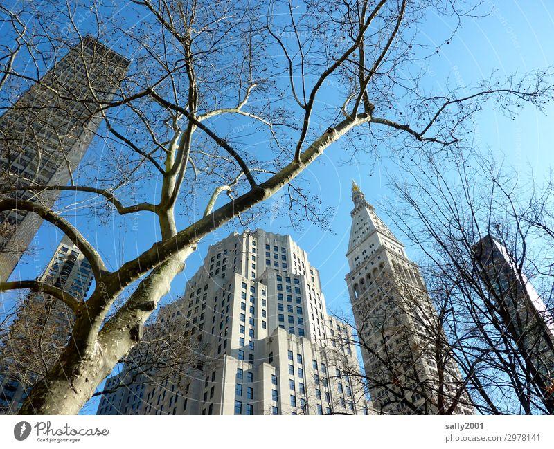 Wolkenkratzer... Baum Platane New York City USA Amerika Stadt Stadtzentrum Skyline Haus Hochhaus gigantisch hoch Partnerschaft Zufriedenheit Netzwerk Winter