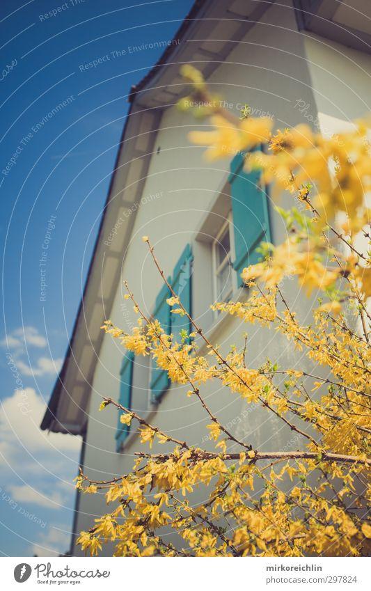 Dreamland Himmel blau schön Pflanze Baum Blume Wolken Haus gelb Frühling Glück Blüte Garten träumen Zufriedenheit Schönes Wetter