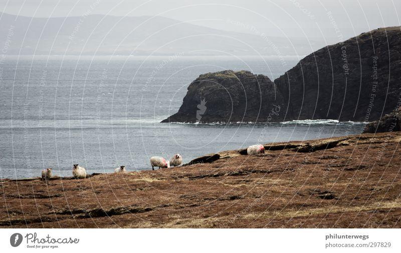 Irish coast Ausflug Abenteuer Ferne Freiheit Expedition Insel Natur Landschaft Erde Wasser Klima Wetter Nebel Regen Wiese Hügel Felsen Küste Bucht Meer