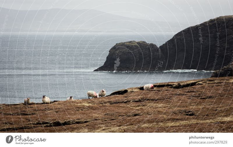 Irish coast Natur Wasser Meer Einsamkeit Landschaft Erholung Ferne dunkel Wiese kalt Freiheit Küste Horizont Felsen Regen Wetter