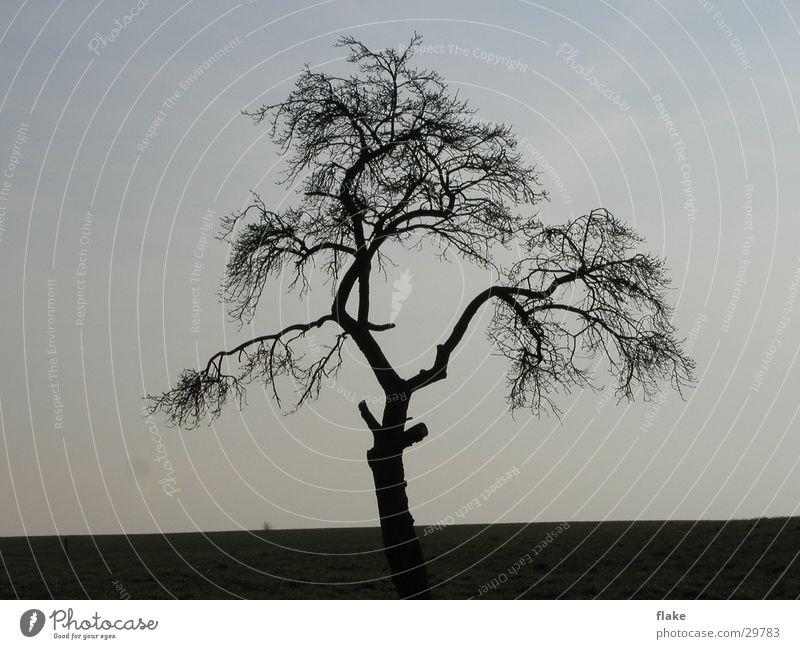 Trauerbaum Natur Himmel Baum Winter Trauer