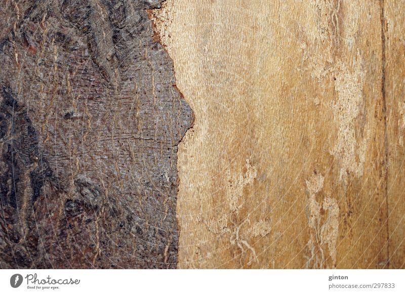 Holzrinde Natur Pflanze Baum gelb hell braun einfach trocken fest
