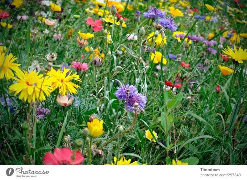 Liebe fürs Detail|Natürlich! Natur Pflanze Sommer Blume Blüte Wiese Blühend Wachstum blau gelb grün rosa weiß Muttertag Blumenwiese mehrfarbig üppig (Wuchs)