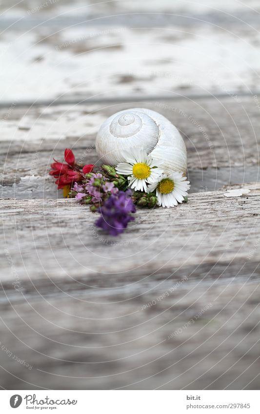 Liebe fürs Detail | Blumen vorm Haus Natur Ferien & Urlaub & Reisen alt weiß Sommer Erholung ruhig Tier Strand Frühling Blüte Glück Holz Feste & Feiern