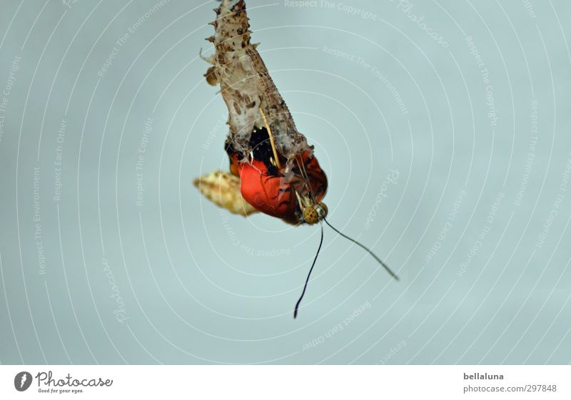 felicitaciones por cumpleaños Fotoline Natur Pflanze Tier Wildtier Schmetterling 1 hängen ästhetisch außergewöhnlich elegant exotisch schön natürlich braun gelb